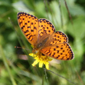 Wildlife, Svaneti
