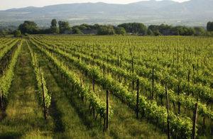 vineyardsm